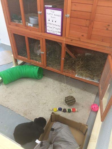 Bunny: Deluxe Suite