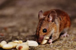 Hamsters / Mice